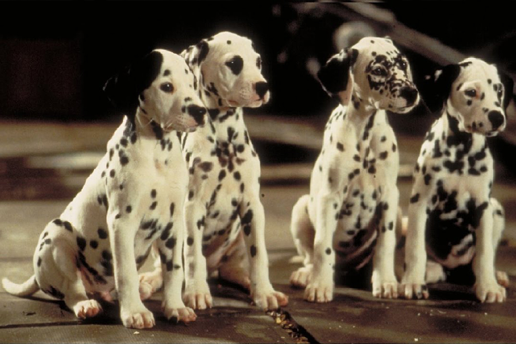 Peck Flicks 2019 101 Dalmatians 1996 Shows Marcus Center For The Performing Arts
